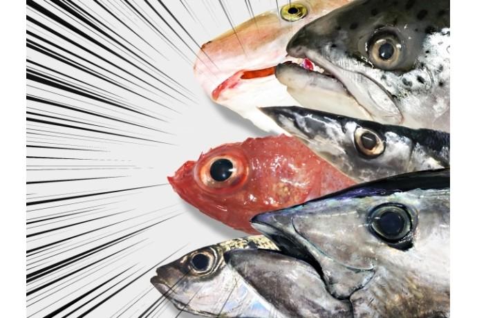 魚は脂肪の減少に効果的?
