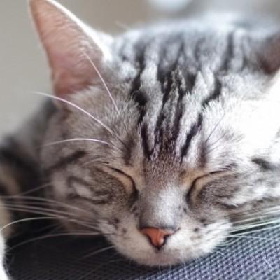 睡眠がダイエットに及ぼす影響